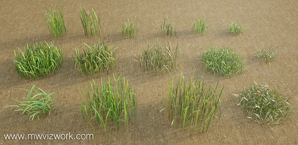 131109_GrassModels