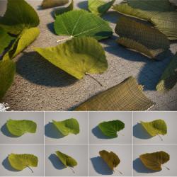 Modelos 3D Gratis XXIV | Hojas