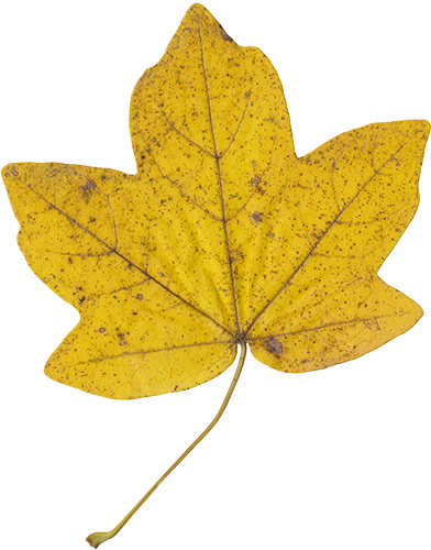 leaf_textures