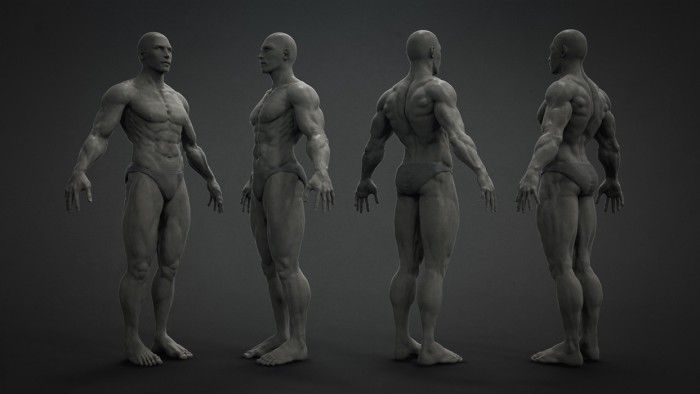 Male_Anatomy_00-700x394