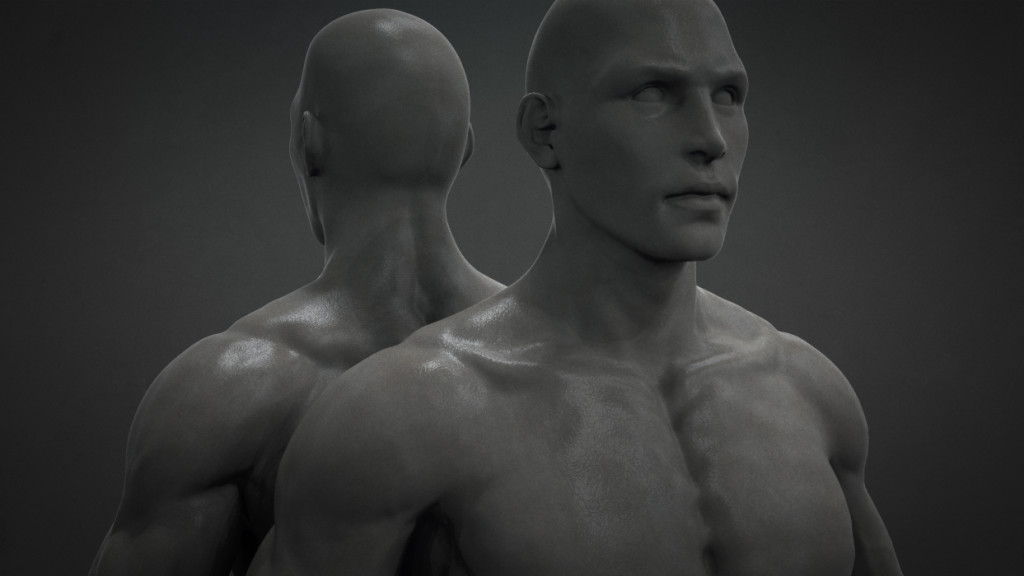 Male_Anatomy_01