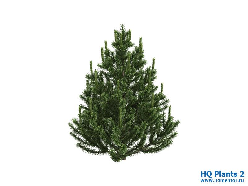 pine_small_1_01