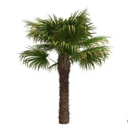 Modelos 3D Gratis XLIII | Vegetación