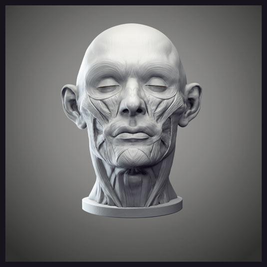 zbrush_anatomy