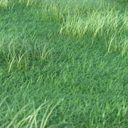 Scripts para 3ds Max | Grass Generator v1.0