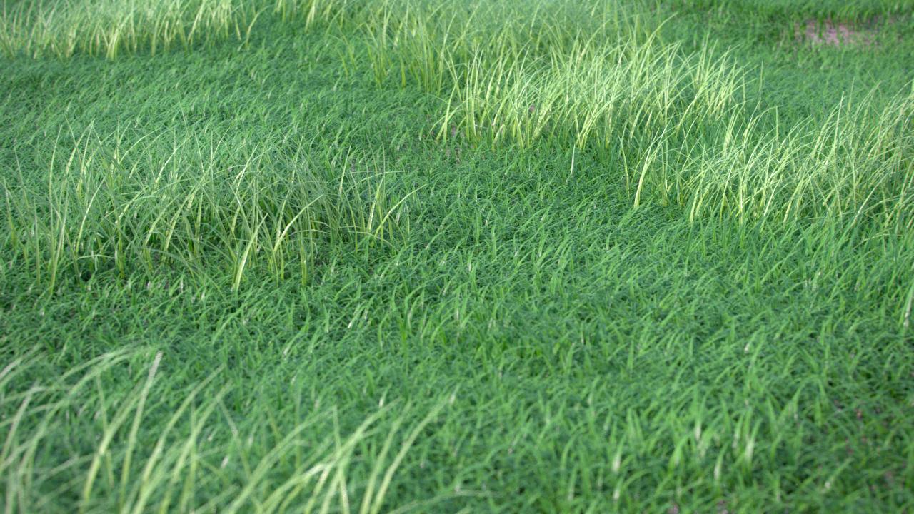 GrassGen_Render_001