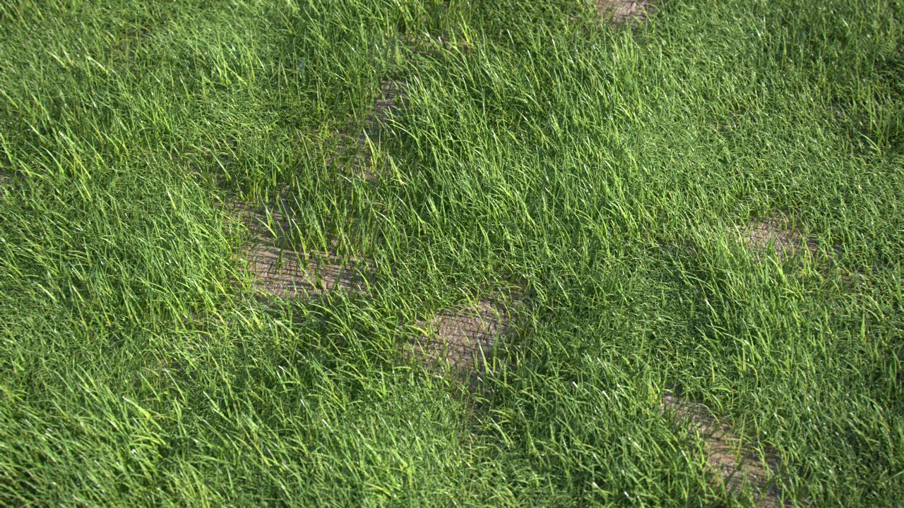 Grass_Gen_Title_NK