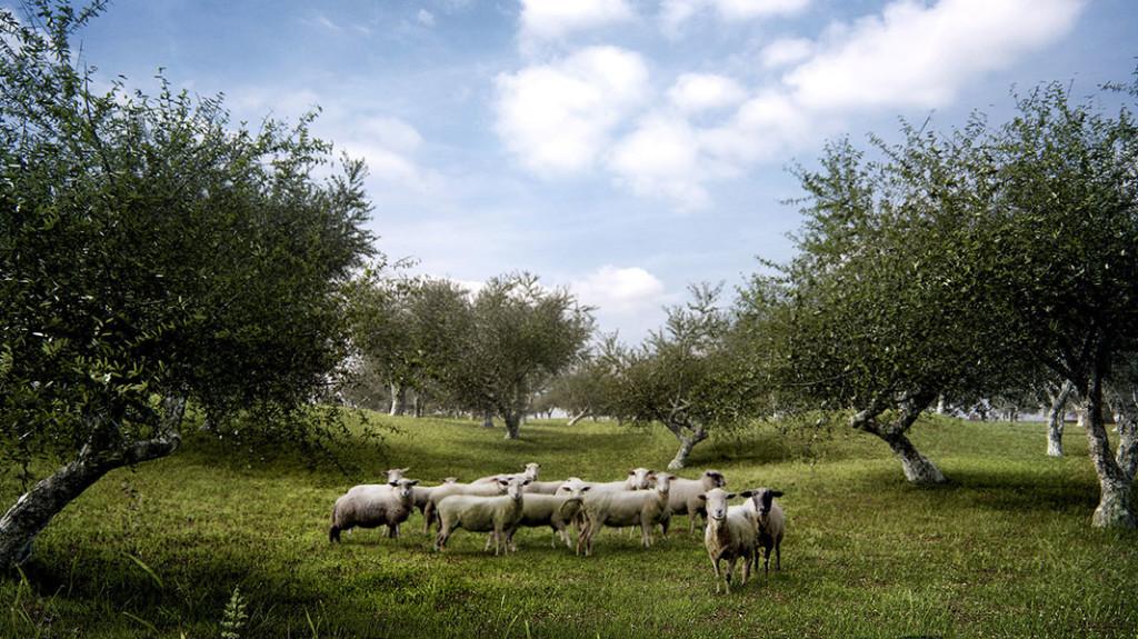 Olive_Trees_Pack_V1_render2