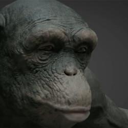 "VFX Breakdown | ""98% Human"""