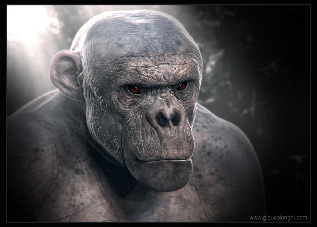 primata_low