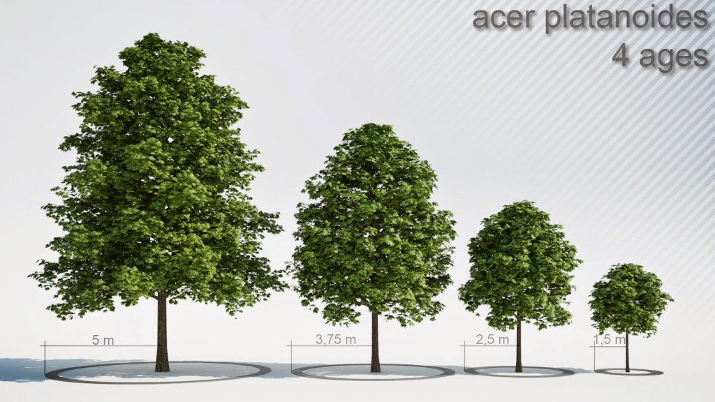 Acer_4_Trees_shared