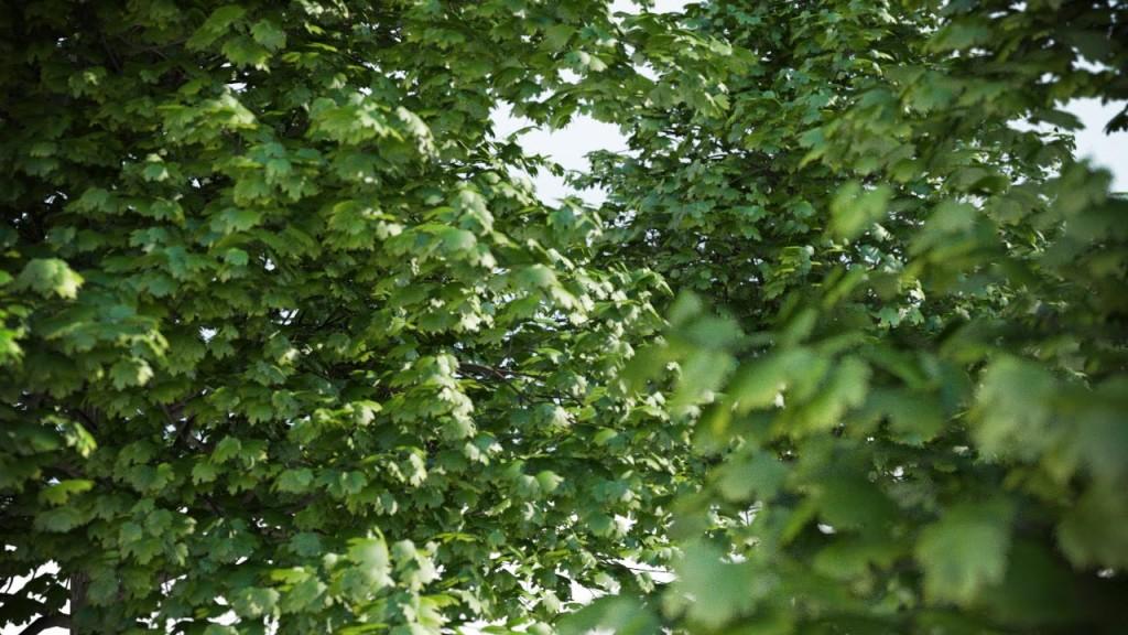 Acer_4_Trees_shared_v3