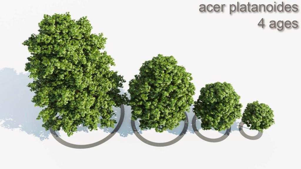 Acer_4_Trees_shared_v4