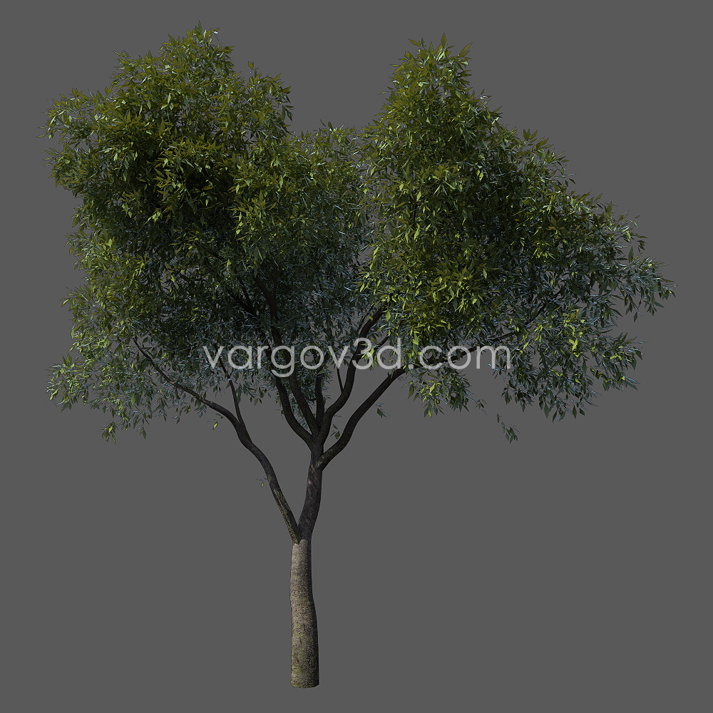 3d tree models10
