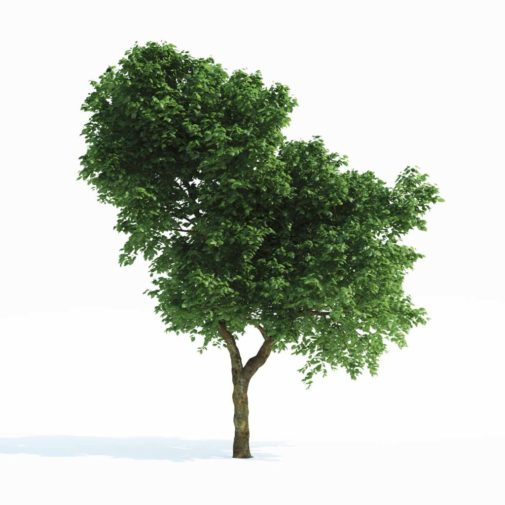 Tree_Common_01_postpro