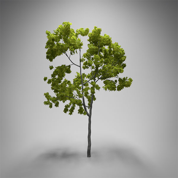 realistic_tree_blender_tutorial