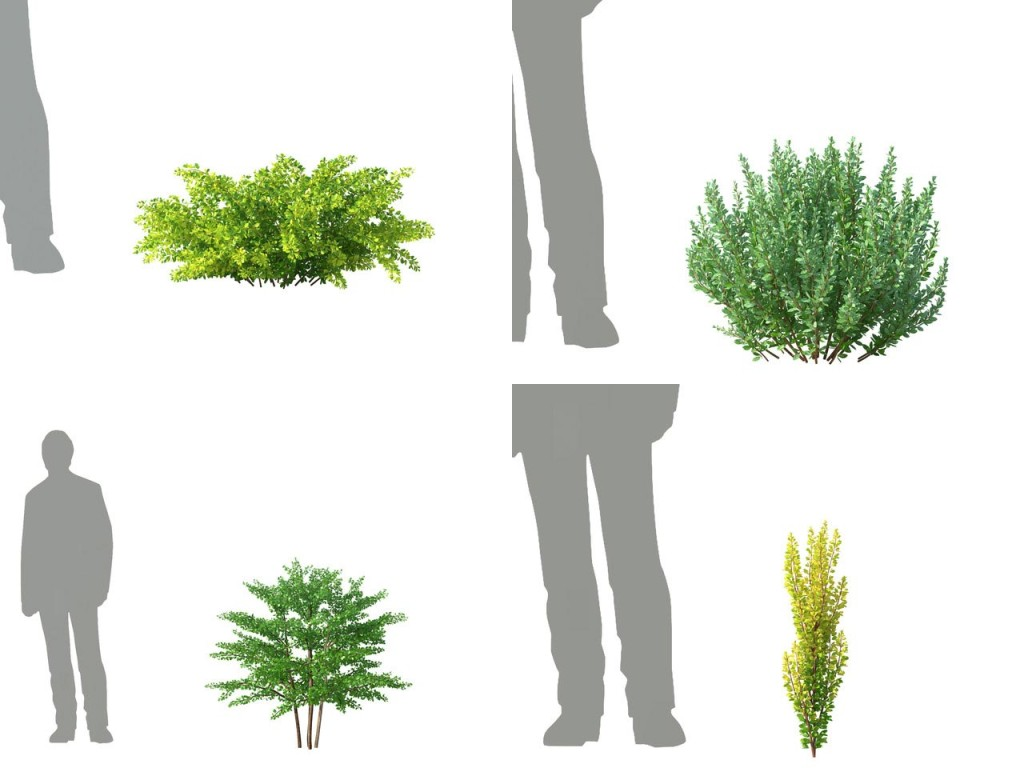 3dmentor_hd_trees_8