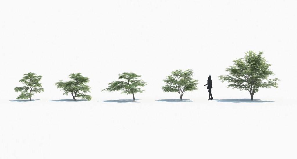 maxtree_plants_02