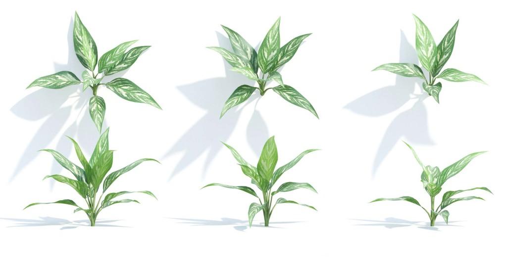 maxtree_plants_04