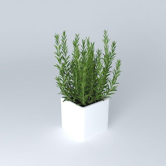 plant_3d_model