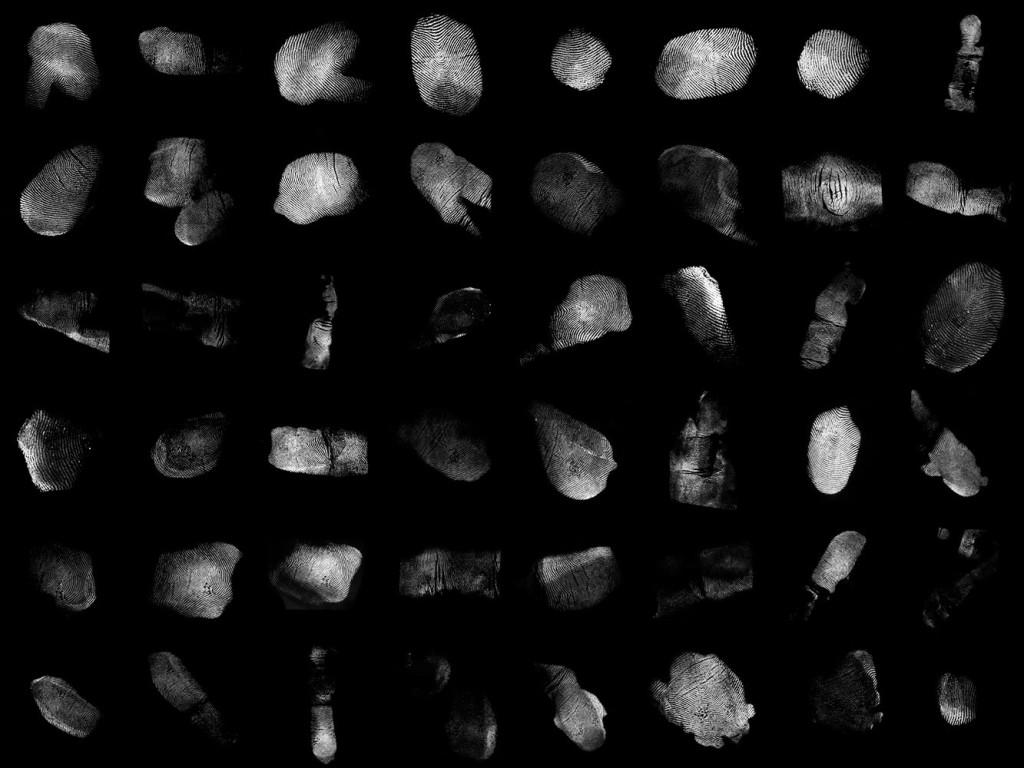 FingerPrints_aplhas_Joost_Vanhoutte