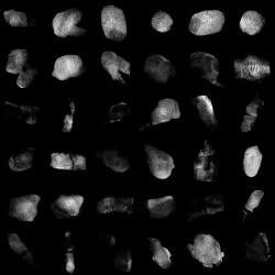 52 Mapas alpha con huellas dactilares