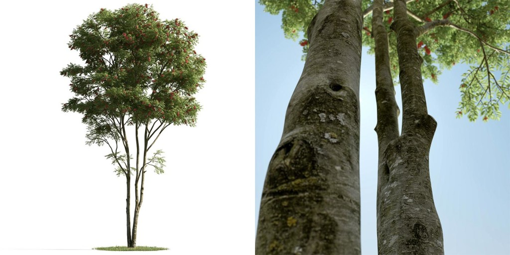 evermotion_archmodels_163_tree_free_3d_model