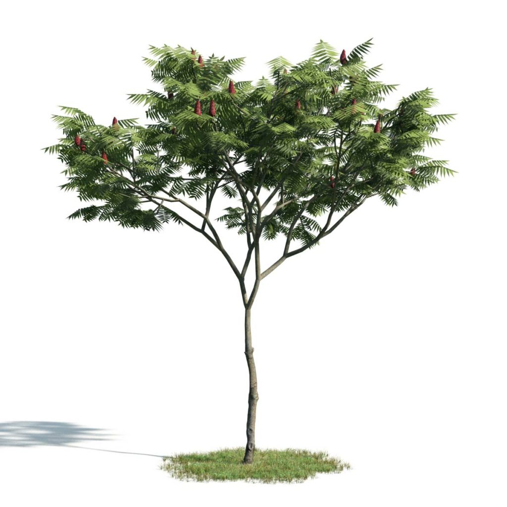 Evermotion_Free_3D_Model_Tree_AM171_005