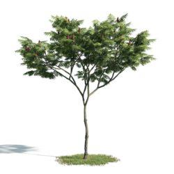Modelos 3D Gratis CCXLVII | Árbol