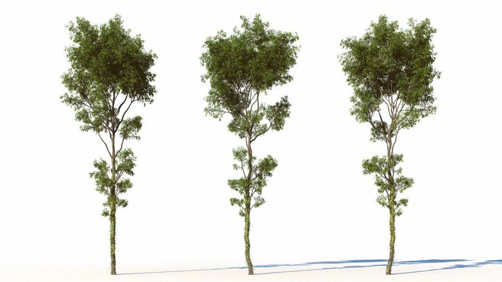 free_tree_3d_model_01