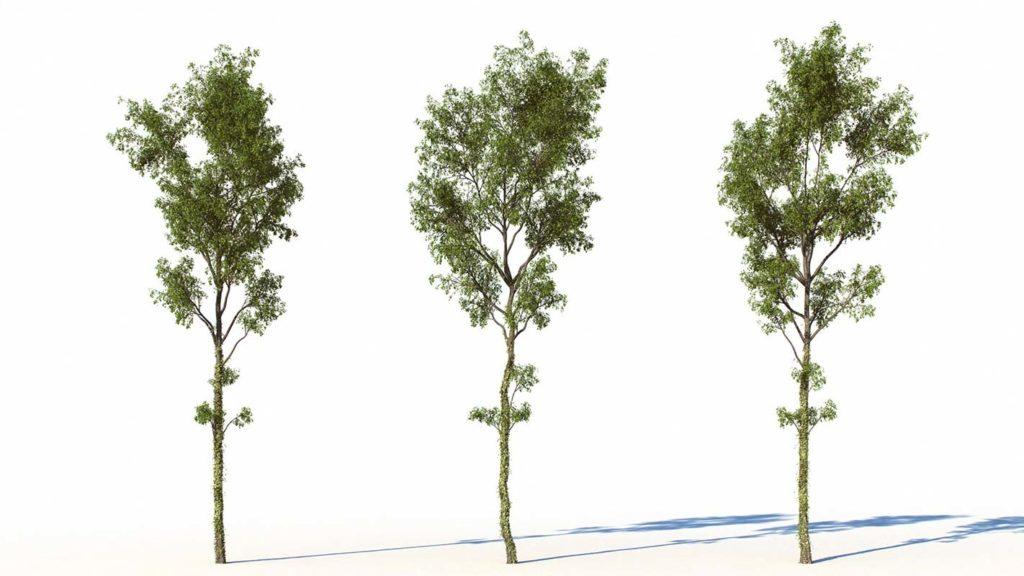 free_tree_3d_model_02