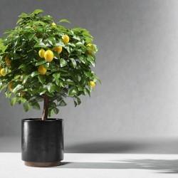 Modelos 3D Gratis CCCXXVII | Limonero