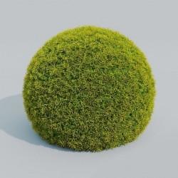 Modelos 3D Gratis CCCLXXXII | Arbusto