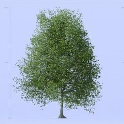 Modelos 3D Gratis CCCXC | Árboles