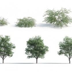 Modelos 3D Gratis CCCLXXXIX | Plantas