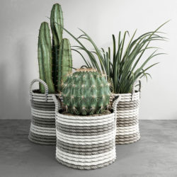 Modelos 3D Gratis CDVIII | Cactus