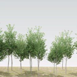 Cómo animar follaje de árboles en 3ds Max