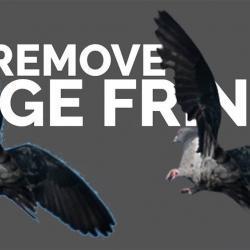 Cómo remover los bordes blancos de tus imágenes