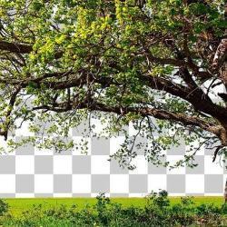 Cómo seleccionar objetos complicados en Photoshop