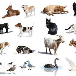 Recortes de animales I