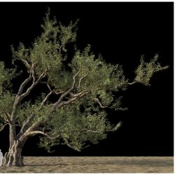 Modelos 3D Gratis DLXXXVII | Eucalipto
