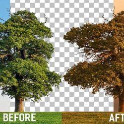 Cómo recortar árboles y reemplazar sus fondos en Photoshop