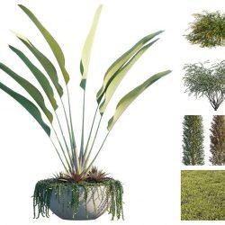 Modelos 3D Gratis DXCVIII | Plantas