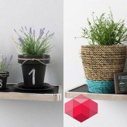 Modelos 3D Gratis DCII | Plantas