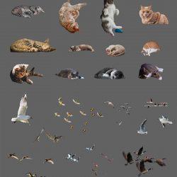 Recortes de animales IV
