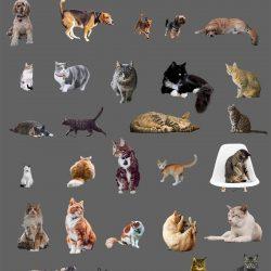 Recortes de animales III