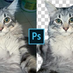 How to cut out fur from busy backgrounds in Photoshop