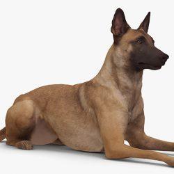 Free 3D Models DCXIV | Malinois Dog