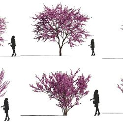Free 3D Models DCXII | Flowering Trees