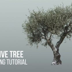 Modeling an olive tree
